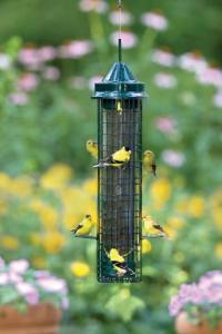 Bird's Choice Brome Squirrel Buster Finch Tube Bird Feeder