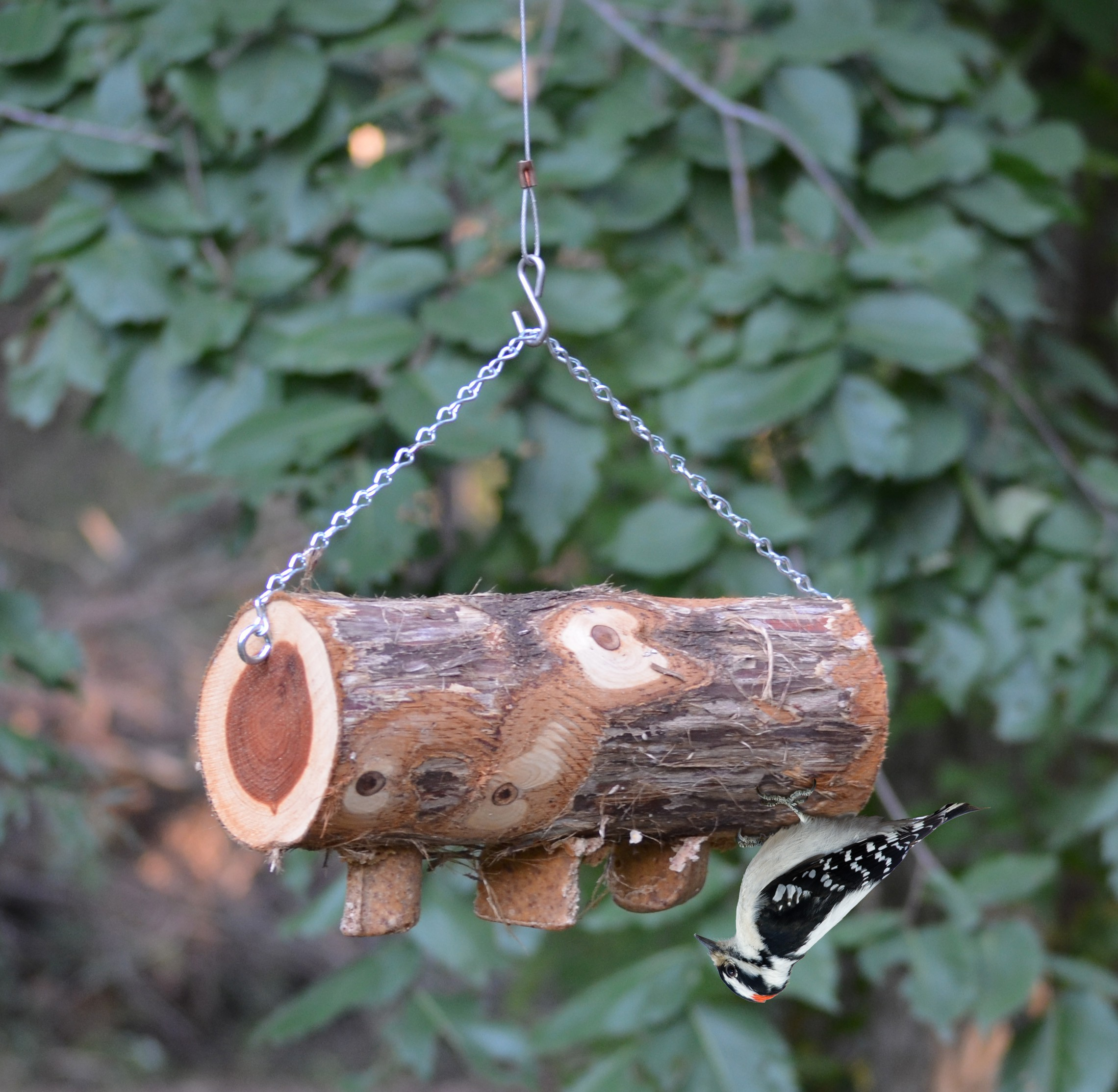 house product irish acrylic garden squirrel feeder window bird proof birds
