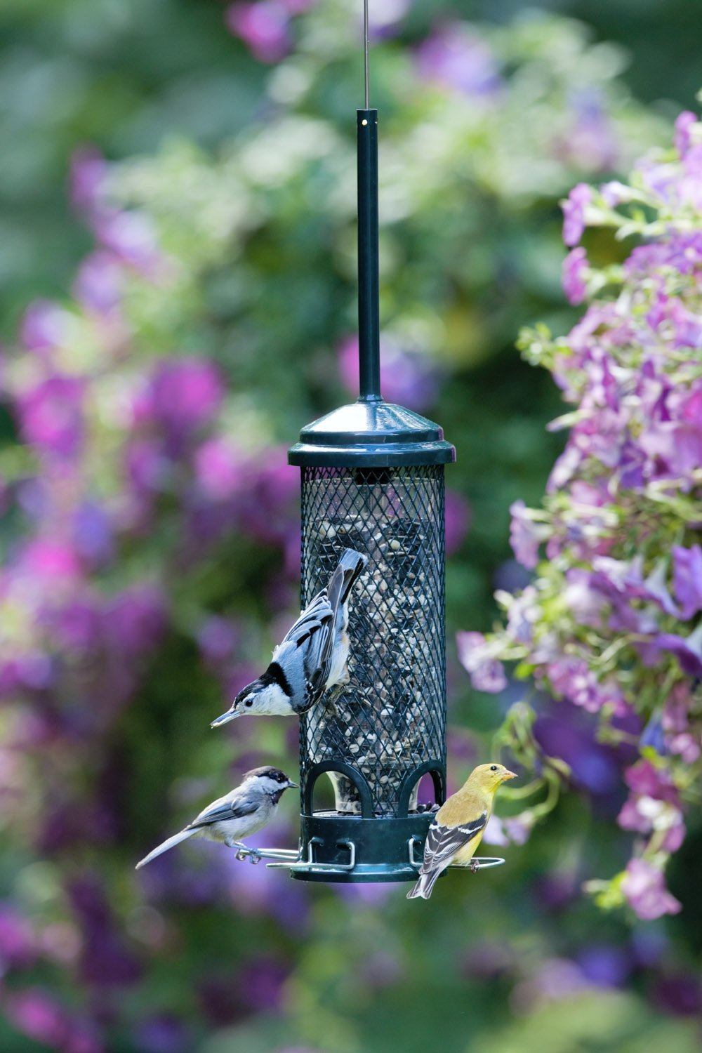 image squirrel ring brome bird favourite about full best trendy feeder images proof plus for buster cardinal enchanting