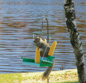 Hiatt Manufacturing Porch Swing Squirrel Feeder