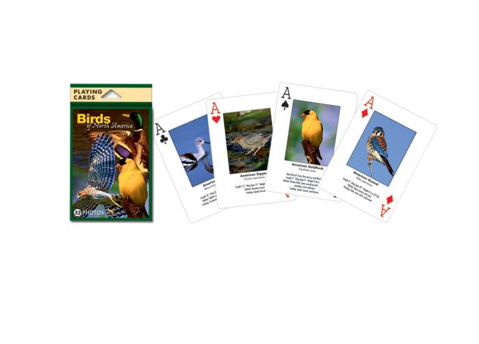 Impact Photographics Playing Cards Birds North American
