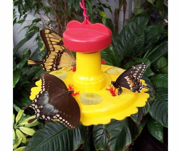 Songbird Essentials Butterfly Feeder