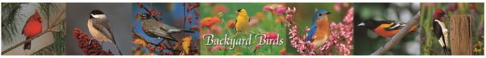 Impact Photographics Plastic Ruler Backyard Birds