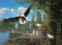 Outset Media Games Nesting Eagles 1000 piece Puzzle