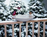 Allied Precision Deck Mounted Heated Bird Bath