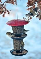 No-No Feeder Red & Black Multi-Tiered Mixed Seed Bird Feeder