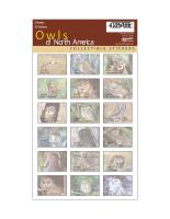 Impact Photographics Sticker Sheet Owls NorthAmerica
