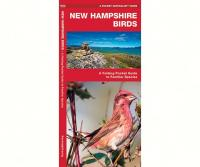 Waterford New Hampshire Birds