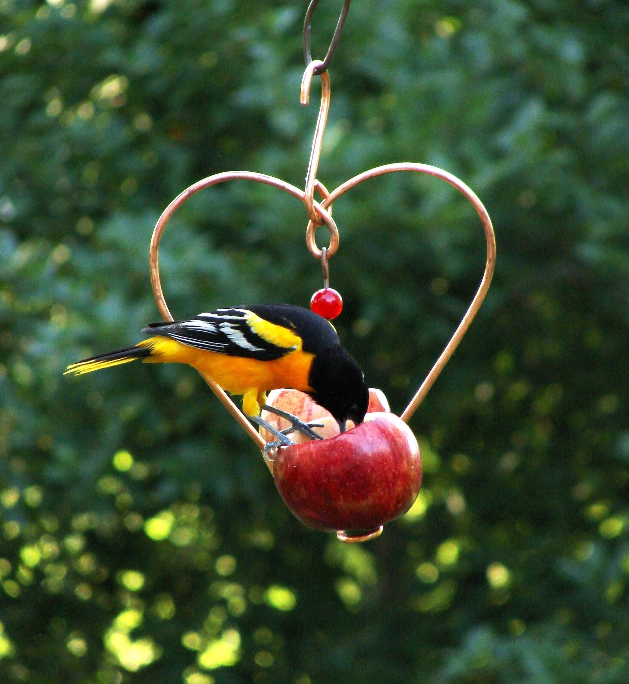 house oriole best feeder bird ounce hummingbird