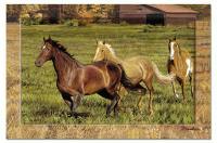 Counter Art Horses Paper Placemat 24 per set