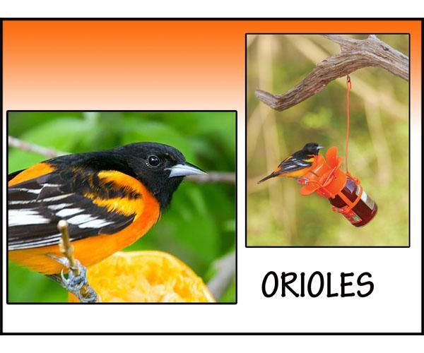 Songbird Essentials Orioles Sign