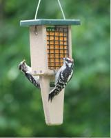Birds Choice Recycled Single Cake Tail Prop Suet Feeder - Green