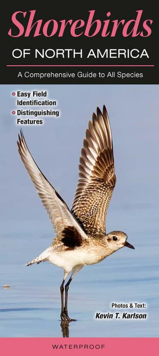 Quick Reference Publishing Shorebirds of North America