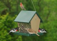 Songbird Essentials Molded Large Hopper Bird Feeder