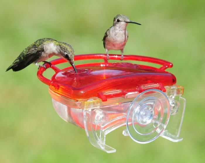 Aspects The Gem Window Hummingbird Bird Feeder