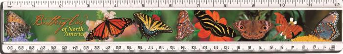 Impact Photographics Plastic Ruler Butterflies