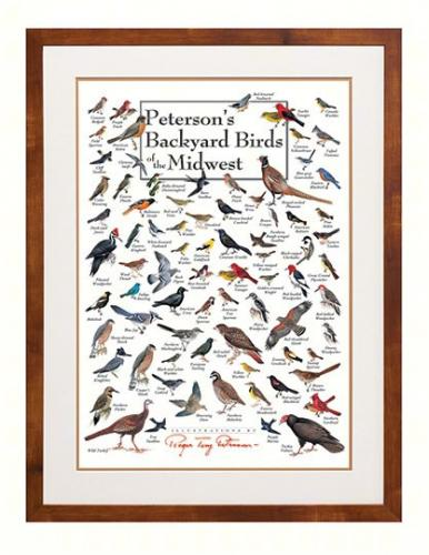 Steven M. Lewers & Associates Peterson's Backyard Birds of the Midwest Poster
