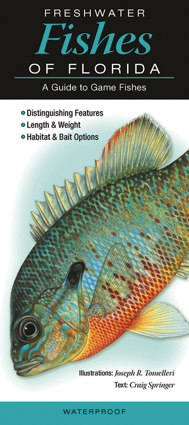 Quick reference publishing freshwater fishes of florida for Florida freshwater fish pictures
