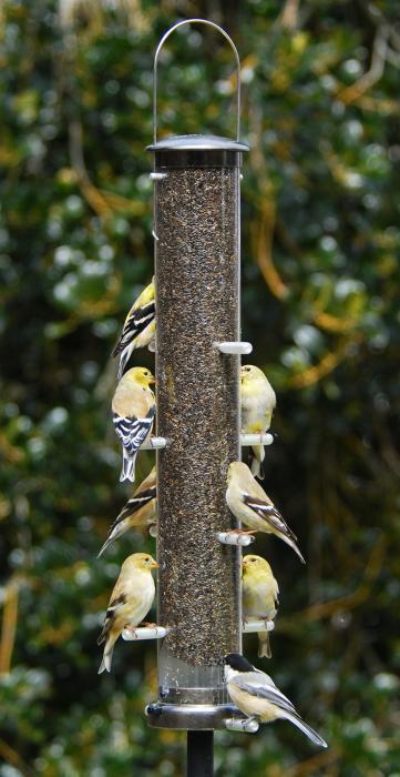 Aspects Large Brushed Nickel Thistle Tube Bird Feeder