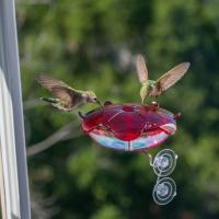 Droll Yankees Ruby Sipper Window Hummingbird Feeder Clear