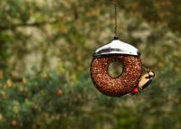 Pinebush Doughnut Peanut Bird Feeder