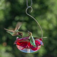 Droll Yankees Ruby Sipper Hummingbird Feeder Clear