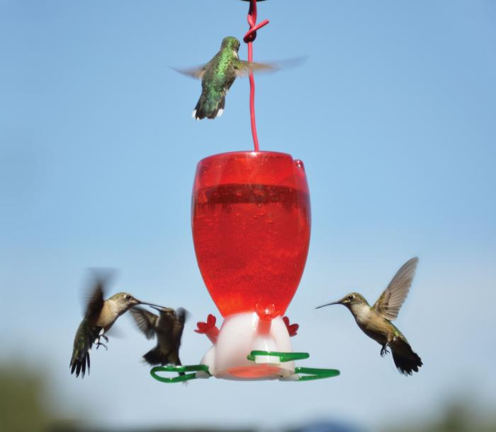 Songbird Essentials Big Red Hummingbird Bird Feeder
