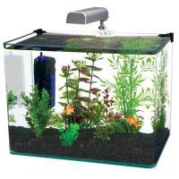 Radius 5 Gallon Glass Aquarium Kit