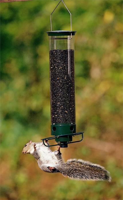 Droll Yankees Yankee Flipper Squirrel Proof Tube Bird Feeder