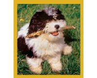 Magnetic Bookmark Shih Tzu Puppy (Ready To Play)