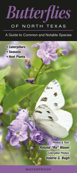 Quick Reference Publishing Butterflies of North Texas