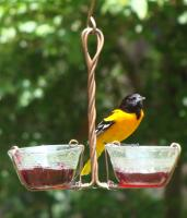 Songbird Essentials Two Cup Jelly Oriole Bird Feeder