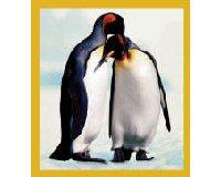 Magnetic Bookmark Penguin 2 Adults