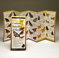 Steven M. Lewers & Associates Common Butterflies Florida