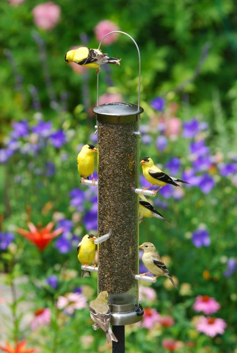 Aspects Brushed Nickel Medium Thistle Tube Bird Feeder w/ Quick Clean Base