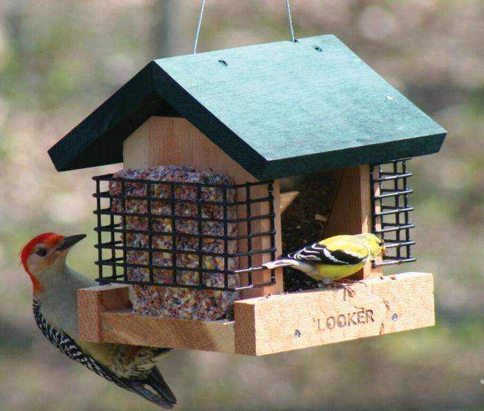 Songbird Essentials 2 Suet and A Seed Bird Feeder