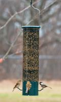 Woodlink Audubon Series The Magnet Squirrel Proof Feeder