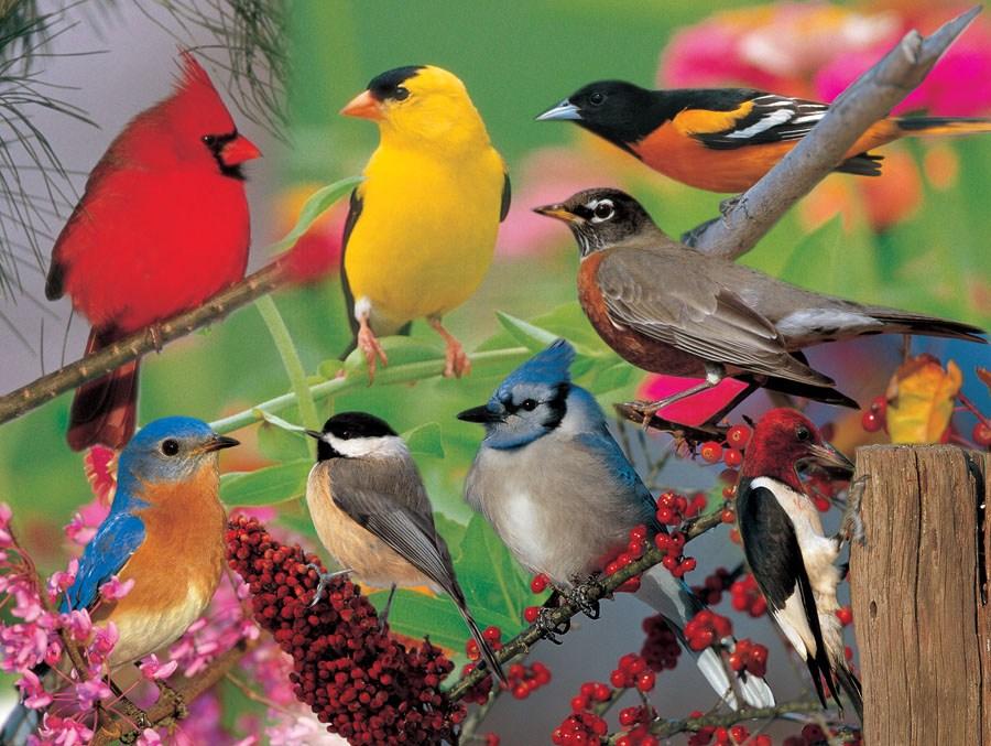 Impact Photographics Puzzle Backyard Birds
