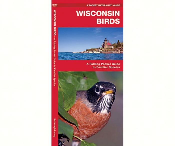 Waterford Wisconsin Birds