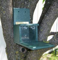 Songbird Essentials Recycled Plastic Squirrels Only Bird Feeder
