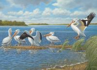 Outset Media Games Pelicans 1000 piece Puzzle