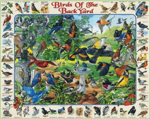 White Mountain Birds of Backyard Puzzle