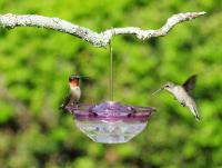 Aspects HummBlossom 4 oz Hummingbird Bird Feeder - Plum Color