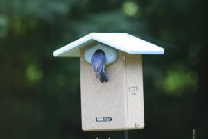 Decorative Bird Houses by Bird's Choice