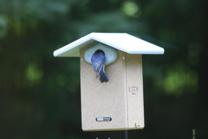 Birds Choice Recycled Ultimate Bluebird House w/Camera