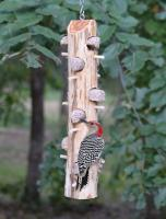 Songbird Essentials 6 Plug Suet Log Bird Feeder With Perches