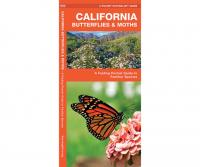 Waterford California Butterflies & Moths