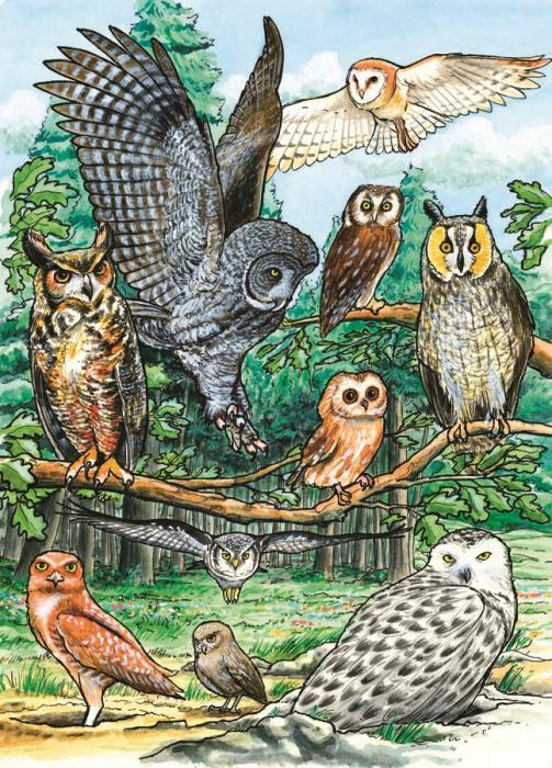 Outset Media Games North American Owls 35 Piece Framed Puzzle