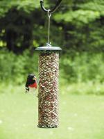 Bird's Choice Peanut Magnet Mesh Bird Feeder - Green