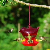 Songbird Essentials Bird Company Red Bird Hummingbird Bird Feeder